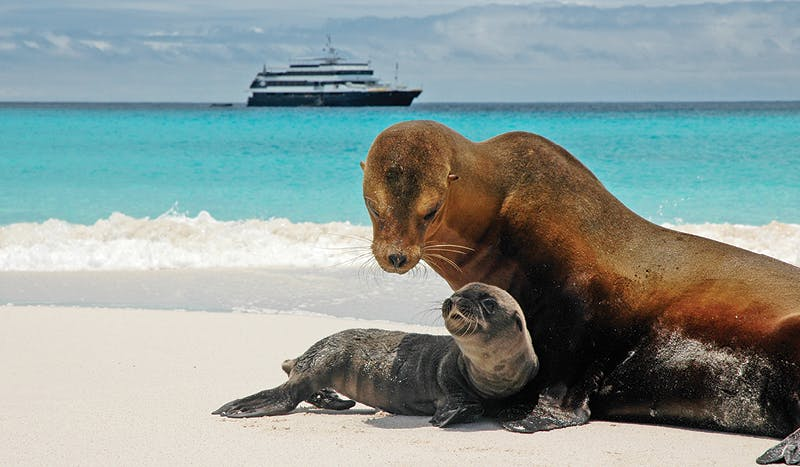 Experience nature's most incredible sites in the Galápagos Islands.