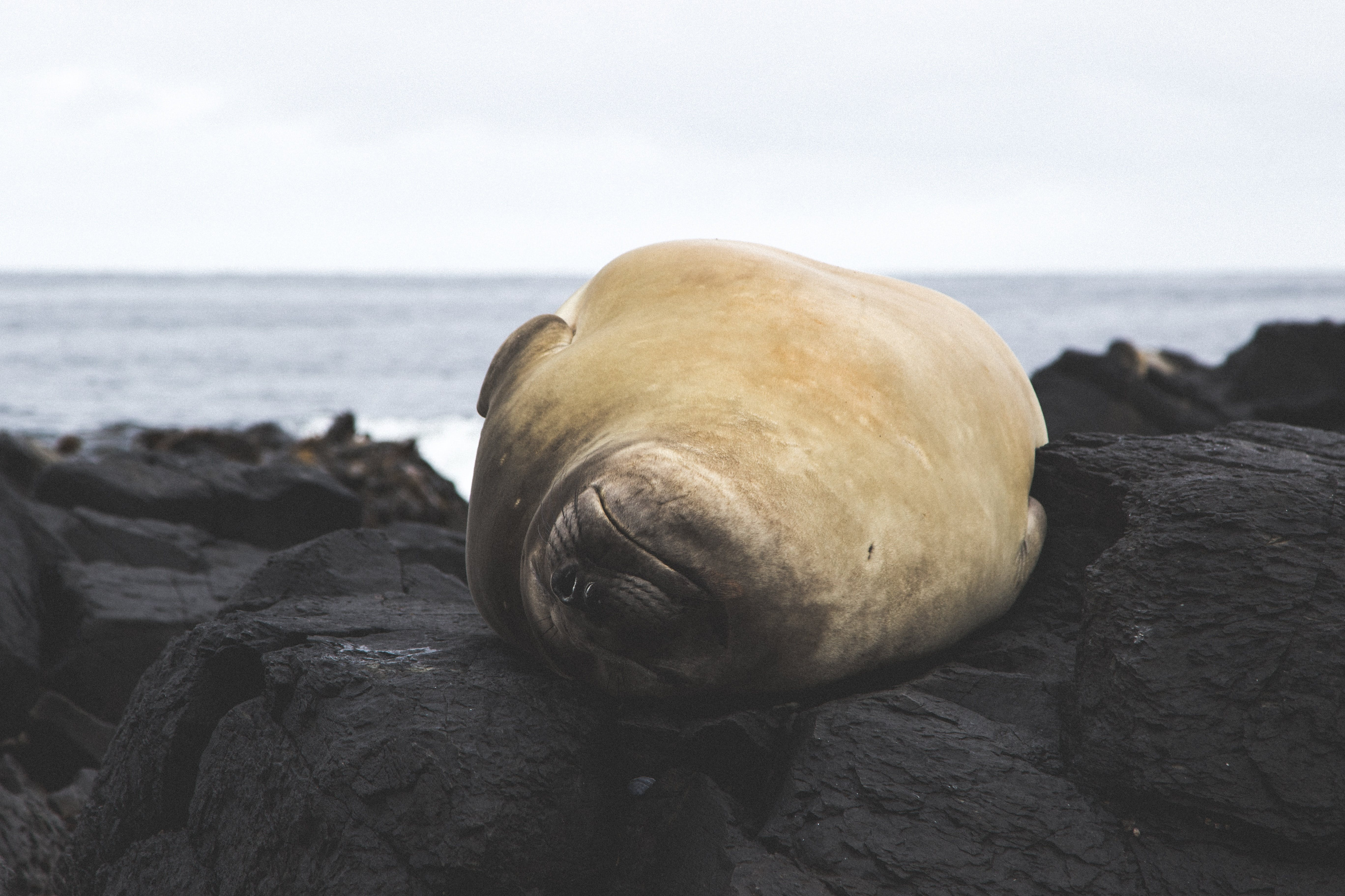 Get Close to a Sleeping Seal - Photo by Etienne Pauthenet
