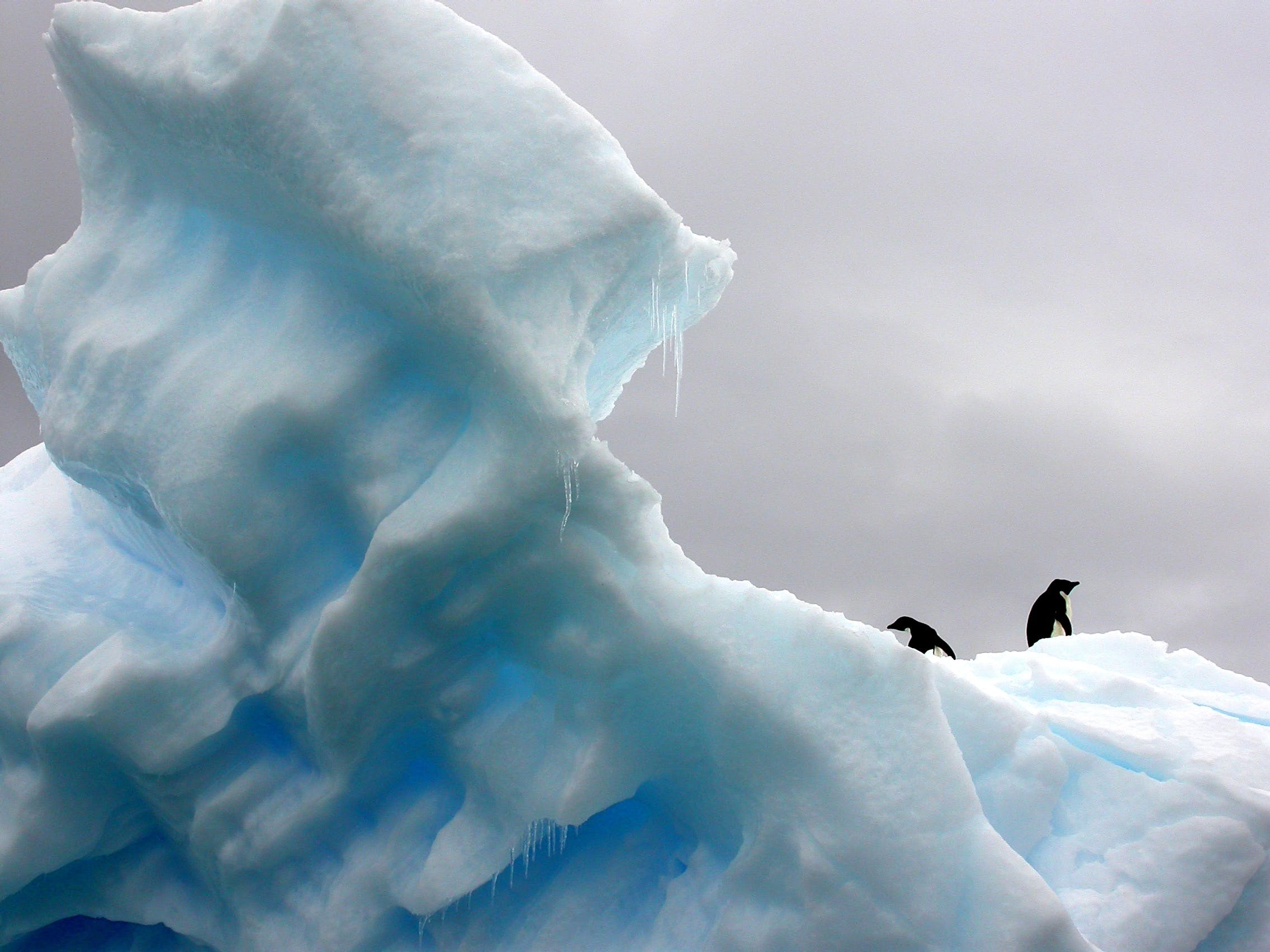 Arctic Ice and Penguins - Photo by Teodor Bjerrang