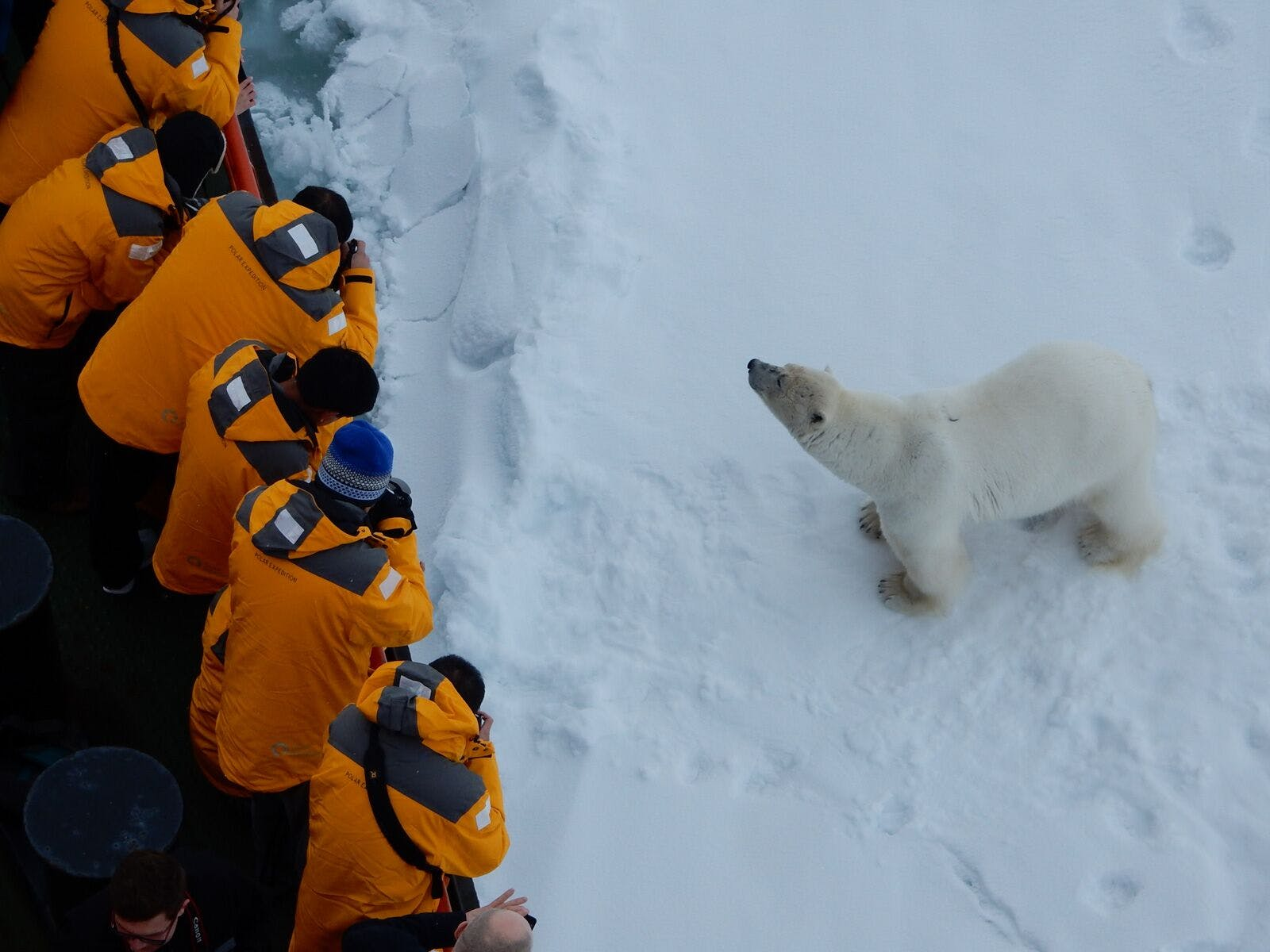 Interact with the locals on a North Pole adventure.