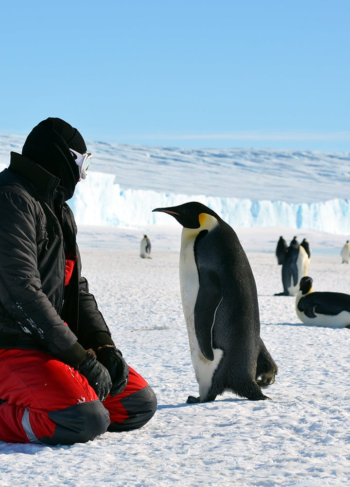 Have your own march of the penguins with Linblad Expeditions.