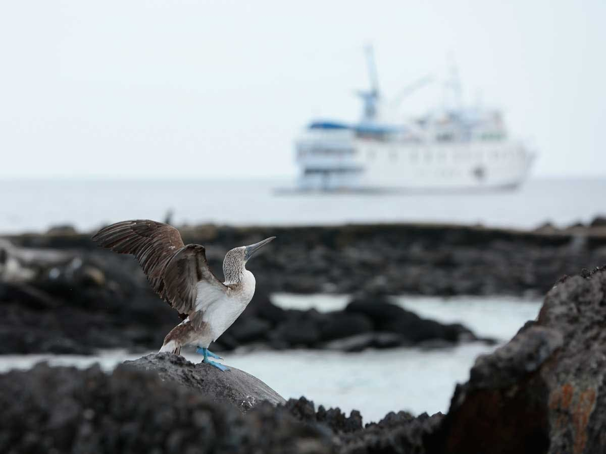 UnCruise Photography Voyages