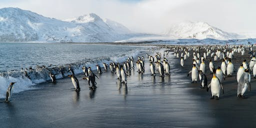 Polar Expeditions With Silversea