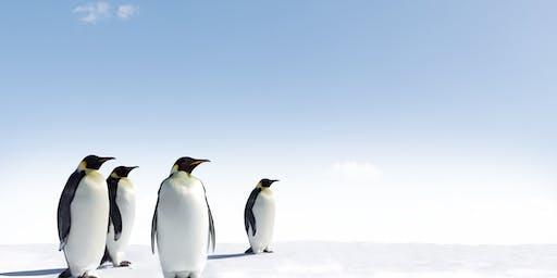 Antarctica Expedition Cruises